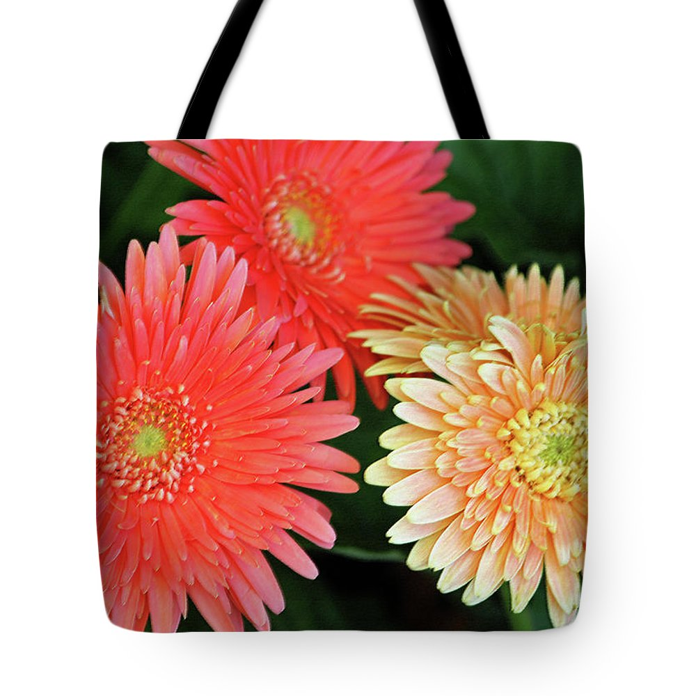 Daisy Tote Bag featuring the photograph Daisies Close Up by Suzanne Gaff
