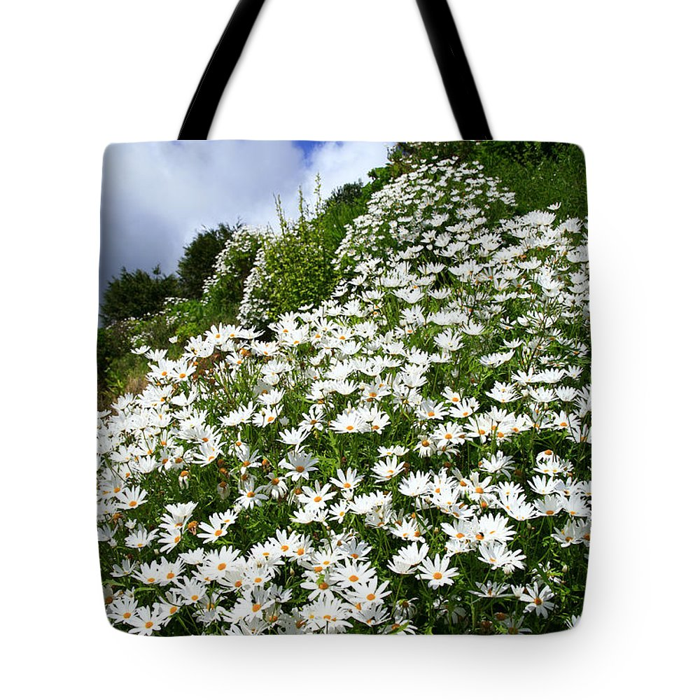 Countryside Tote Bag featuring the photograph Daisies by Gaspar Avila