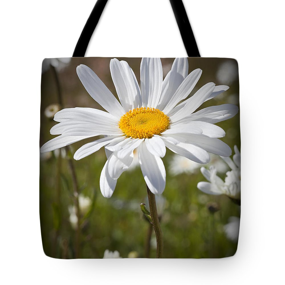 Daisy Tote Bag featuring the photograph Daisy 1 by Kelley King