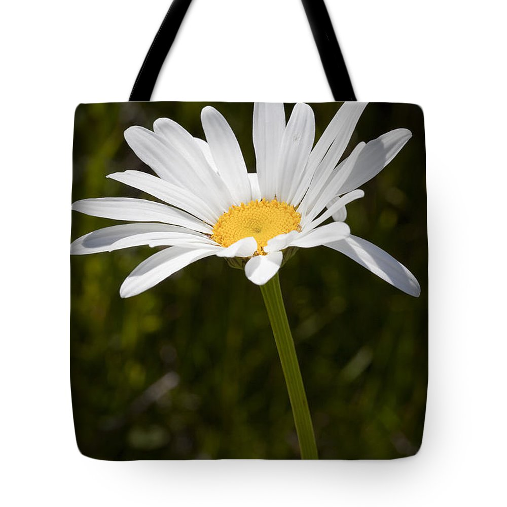 Daisy Tote Bag featuring the photograph Daisy 3 by Kelley King