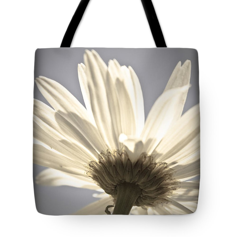 Flower Tote Bag featuring the photograph Daisy by Danielle Silveira