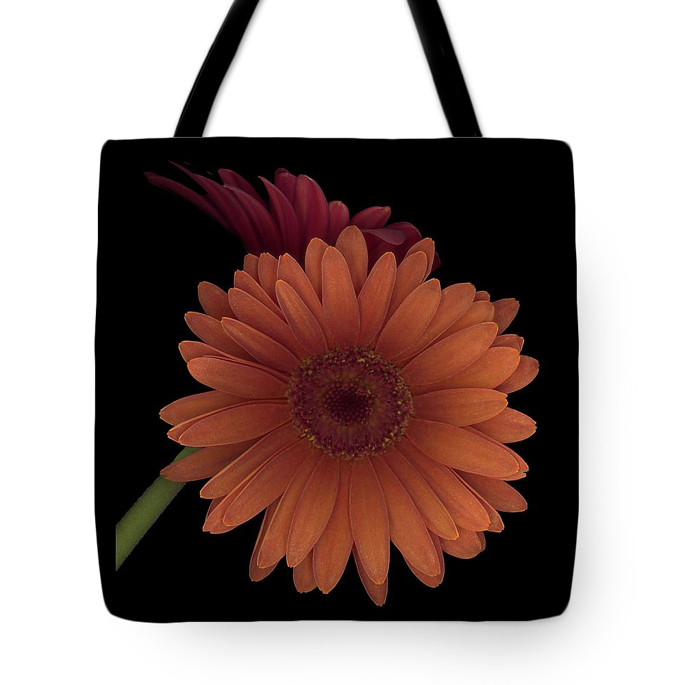 Gerber Tote Bag featuring the photograph Daisy Tilt by Heather Kirk