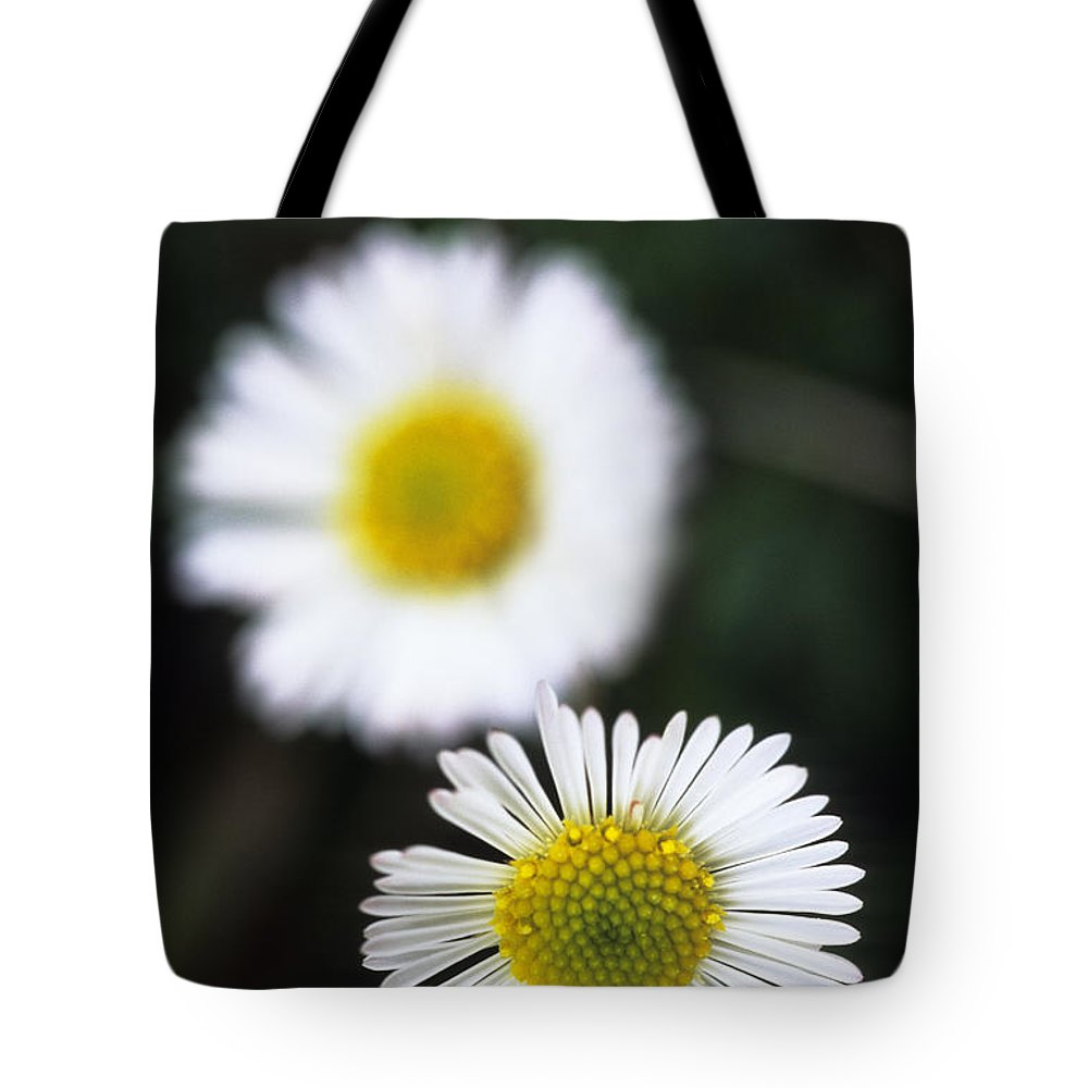 Afternoon Tote Bag featuring the photograph Daisys by Carl Shaneff - Printscapes