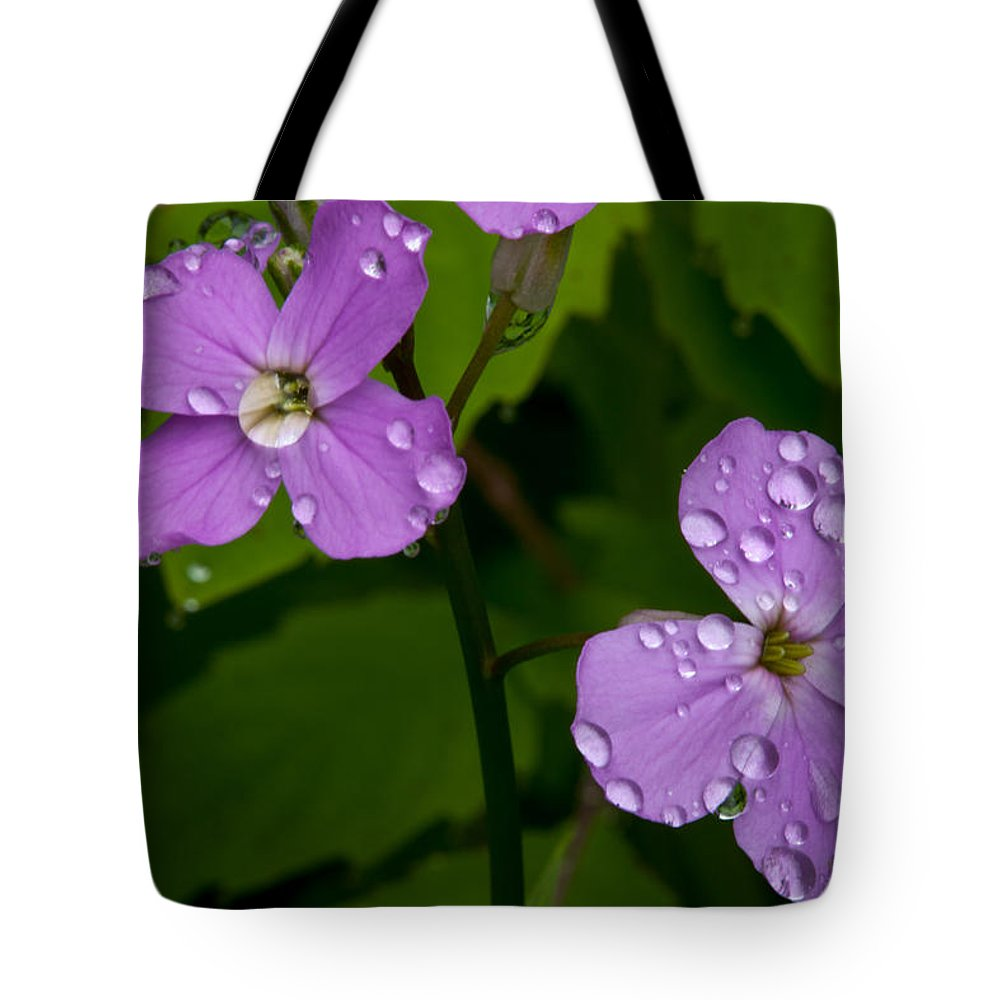 Wildflowers Tote Bag featuring the photograph Dame's Rocket Raindrops#2 by Irwin Barrett