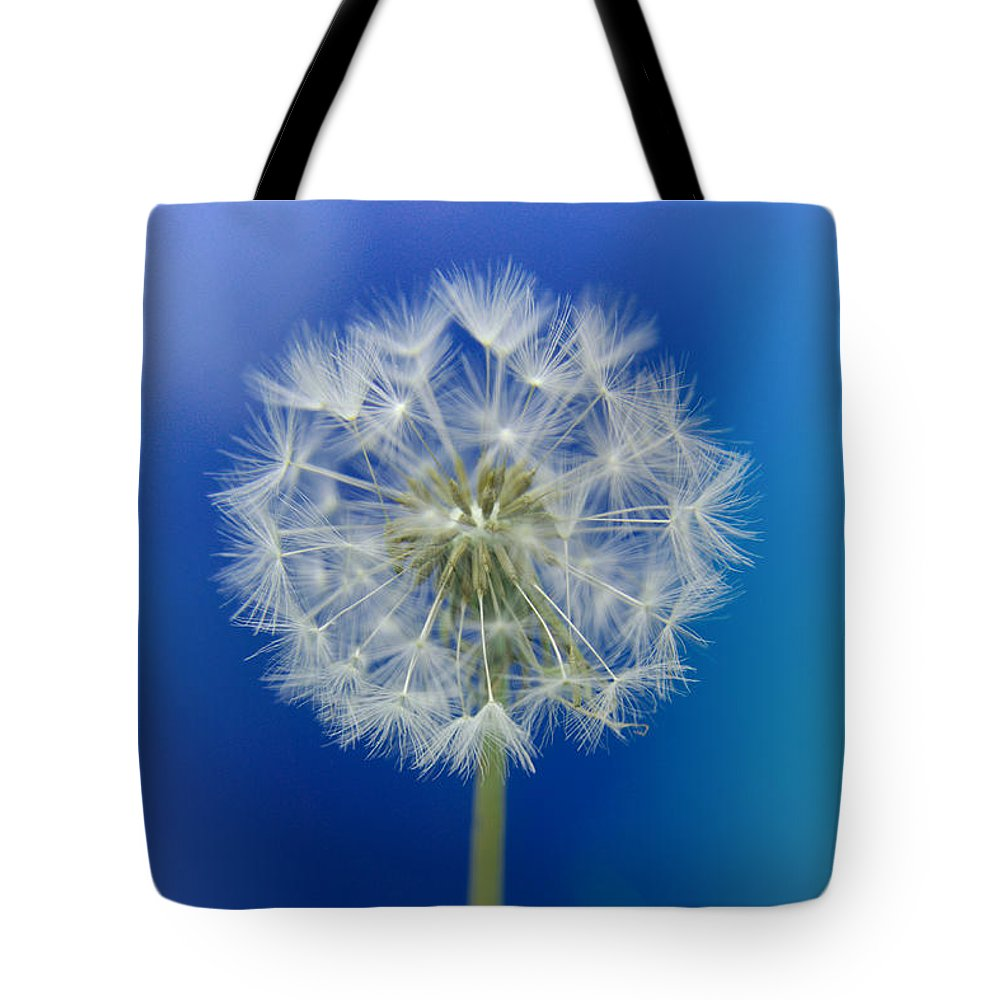Asteraceae Tote Bag featuring the photograph Dandelion by MSVRVisual Rawshutterbug