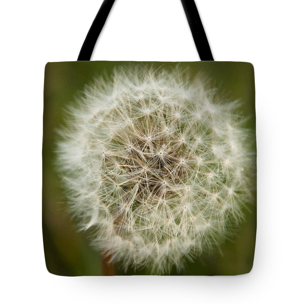 Nature Tote Bag featuring the photograph Dandelion by Steven Natanson