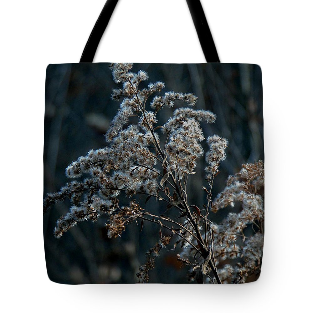 Winter Tote Bag featuring the photograph Dandy Dry by Devin Dixon