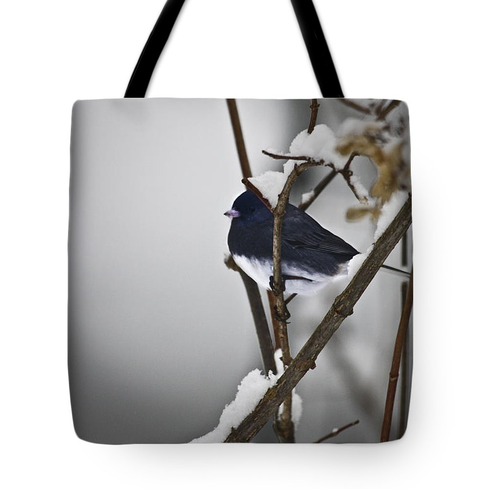 Junco Tote Bag featuring the photograph Dark-eyed Junco by Teresa Mucha