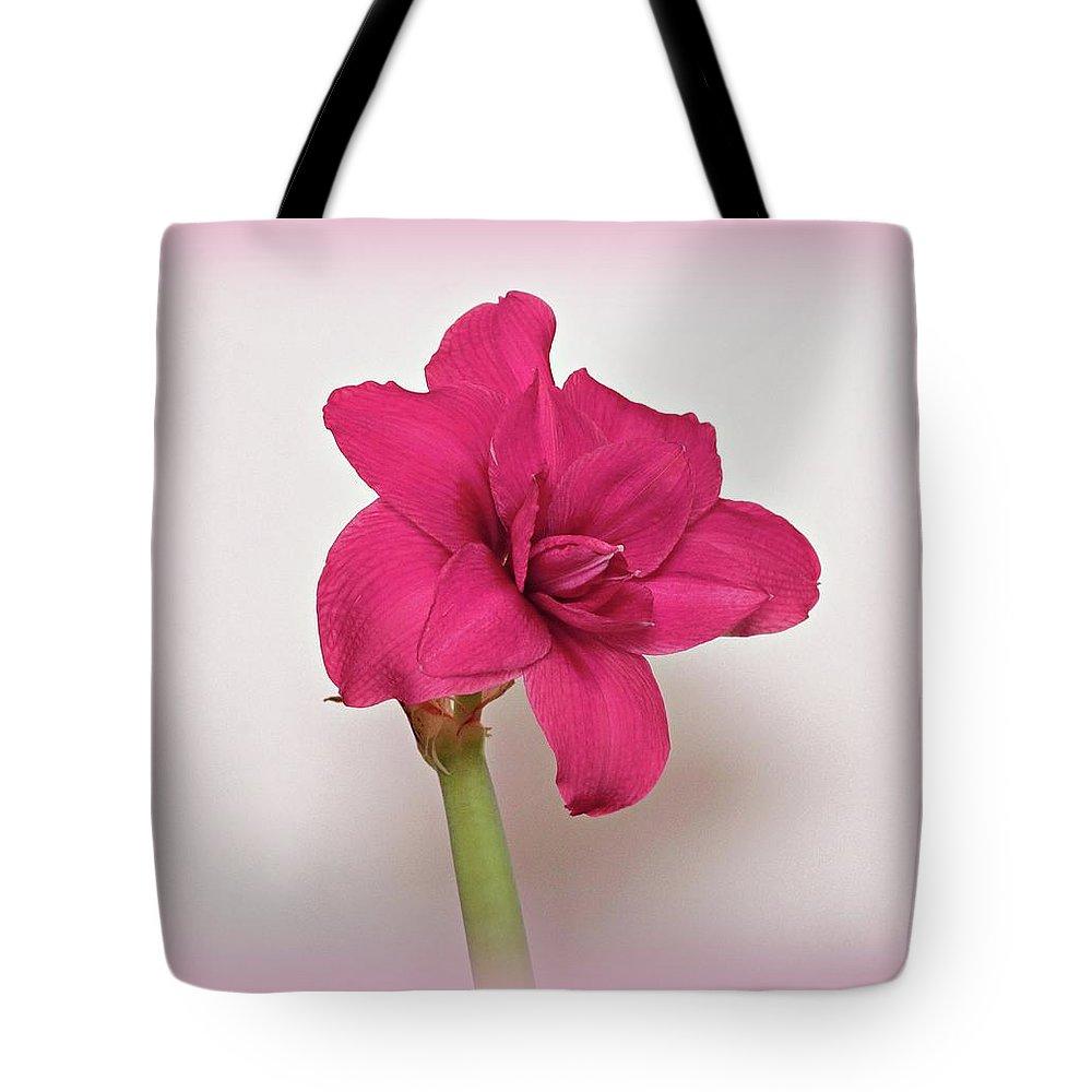 Amaryllis Tote Bag featuring the photograph Dark Pink Amaryllis by Sandy Keeton