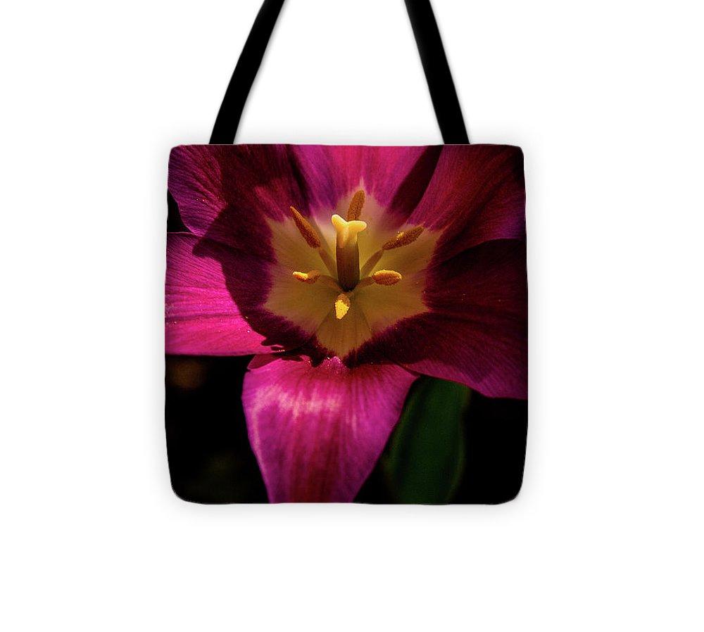 Designs Similar to Darkly Lit Purple Tulip