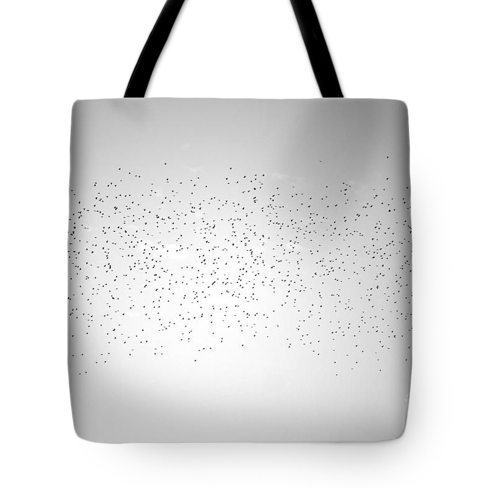 Birds Tote Bag featuring the photograph Darkness Falls by Jeramey Lende