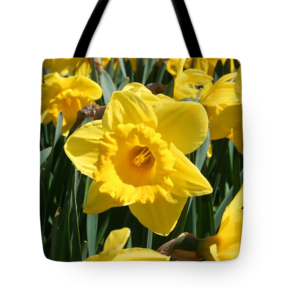 Daffodils Tote Bag featuring the photograph Darling Spring Daffodils by Mary Gaines