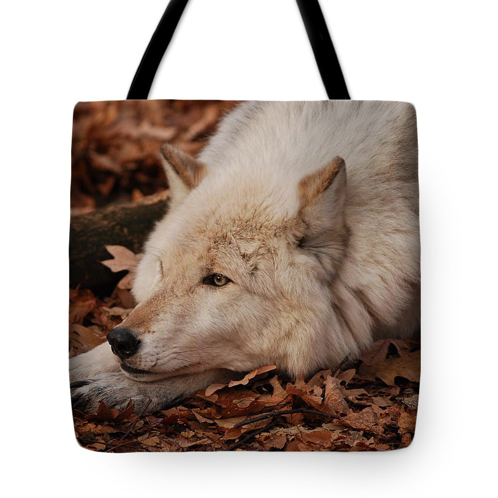 Wolf Tote Bag featuring the photograph Day Dreamer by Lori Tambakis