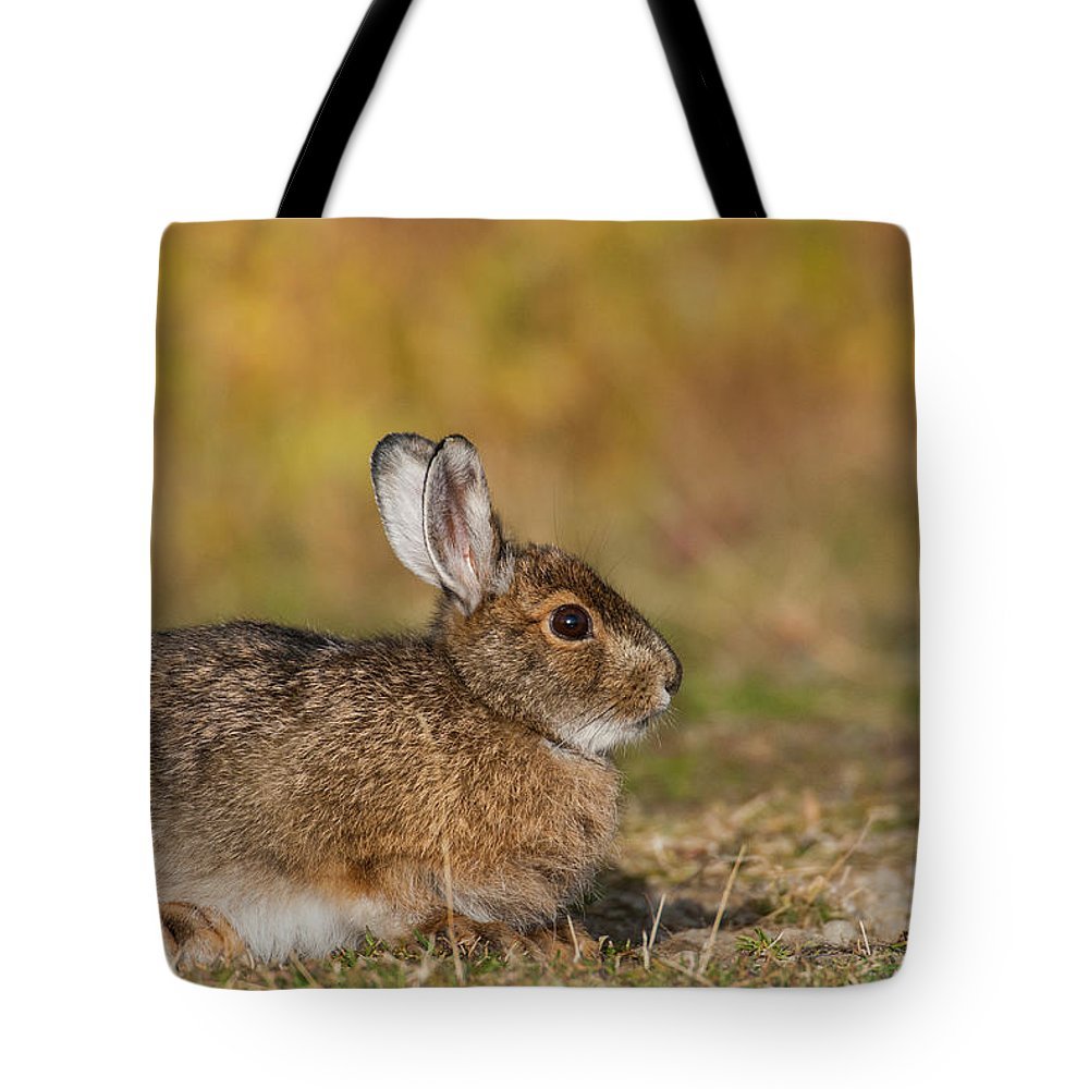 Alaska Tote Bag featuring the photograph Ddp Djd Snowshoe Hare 98 by David Drew
