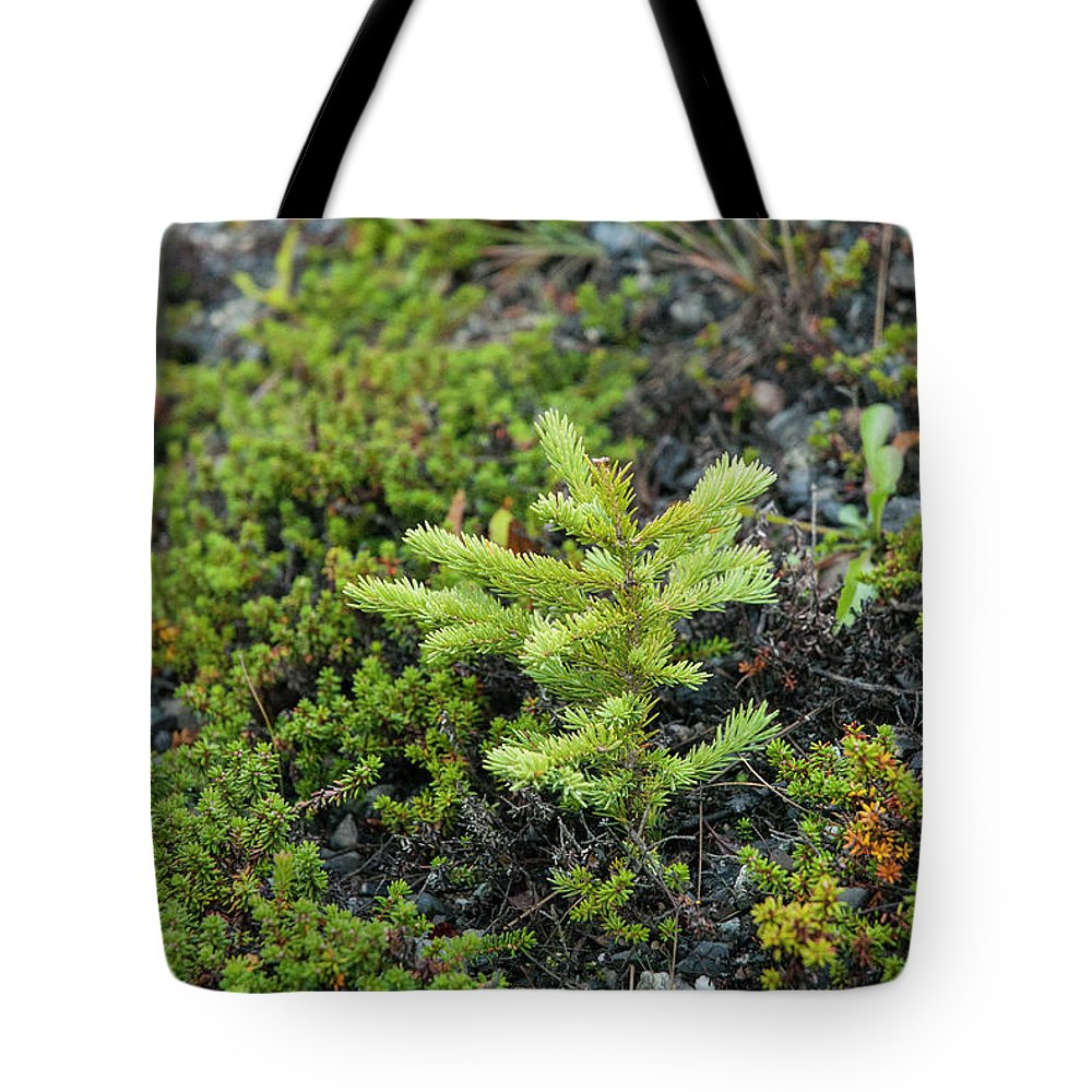 Seedling Tote Bag featuring the photograph Ddp Djd Spruce Seedling 16 by David Drew