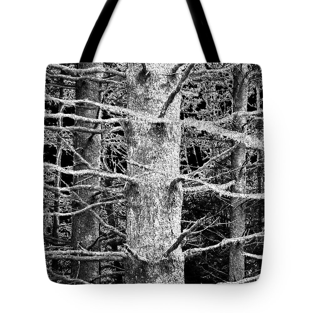 Woods Tote Bag featuring the photograph Deep In The Woods by Will Borden
