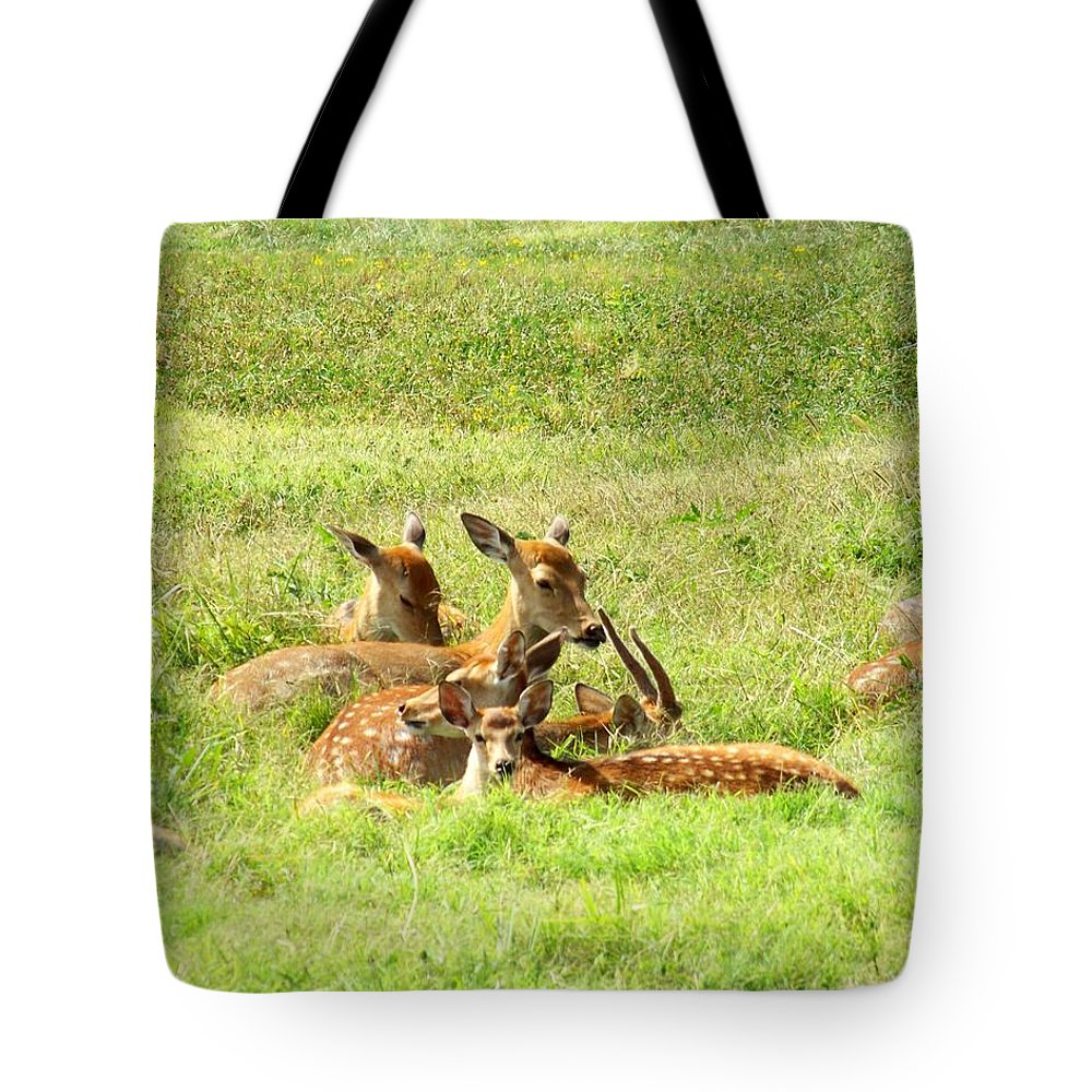 Deer Tote Bag featuring the photograph Deer Family by Jai Johnson