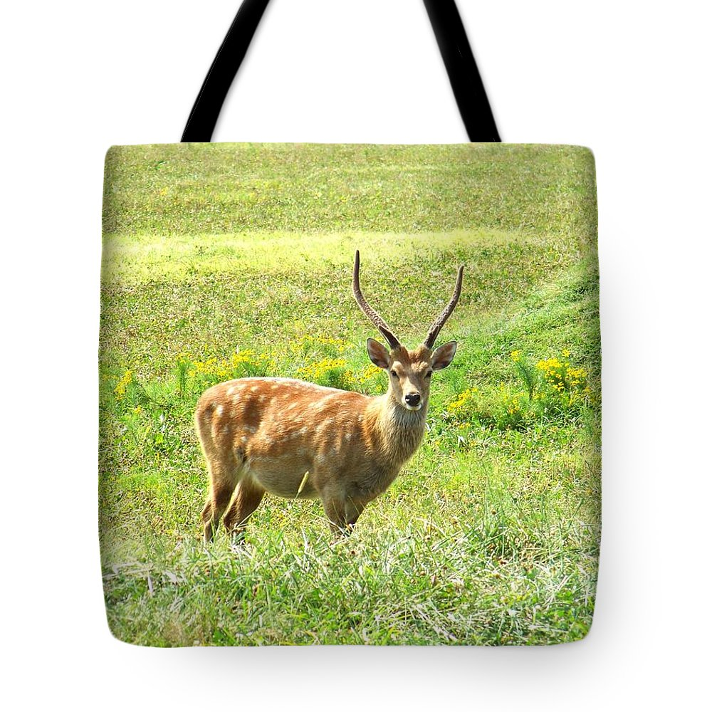 Deer Tote Bag featuring the photograph Deer by Jai Johnson