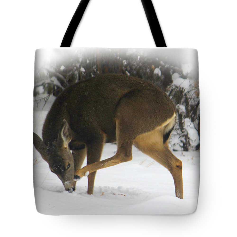 Deer Tote Bag featuring the photograph Deer With An Itch by James Eddy