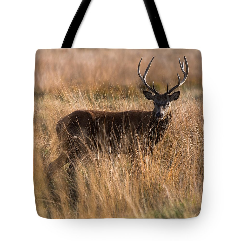 Richmond Tote Bag featuring the photograph Deers Attention by Matt Malloy