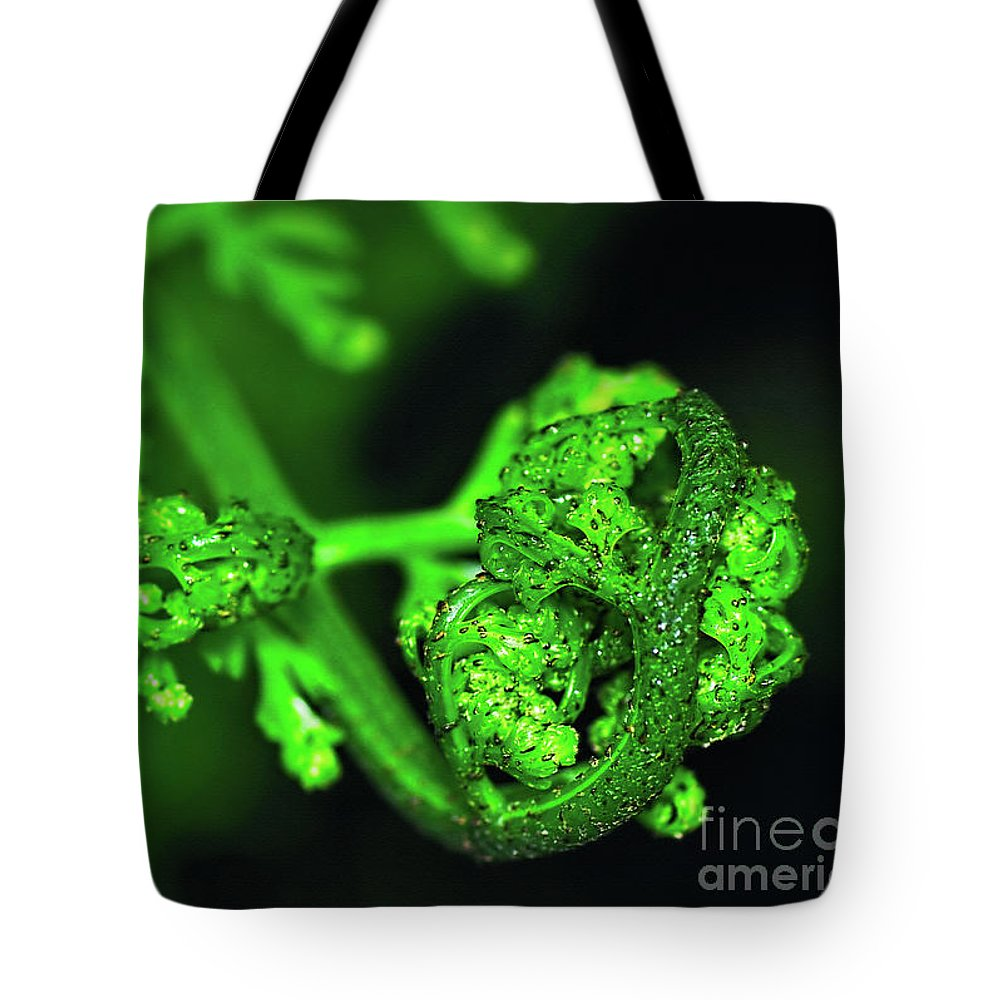 Photography Tote Bag featuring the photograph Delicate Fern Unfolding by Kaye Menner