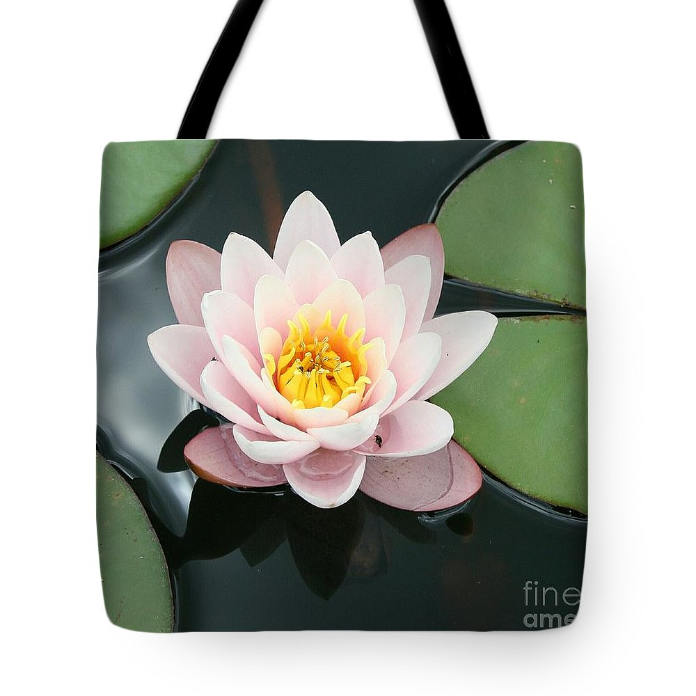 Waterlily Tote Bag featuring the photograph Delicate Waterlily by Christiane Schulze Art And Photography