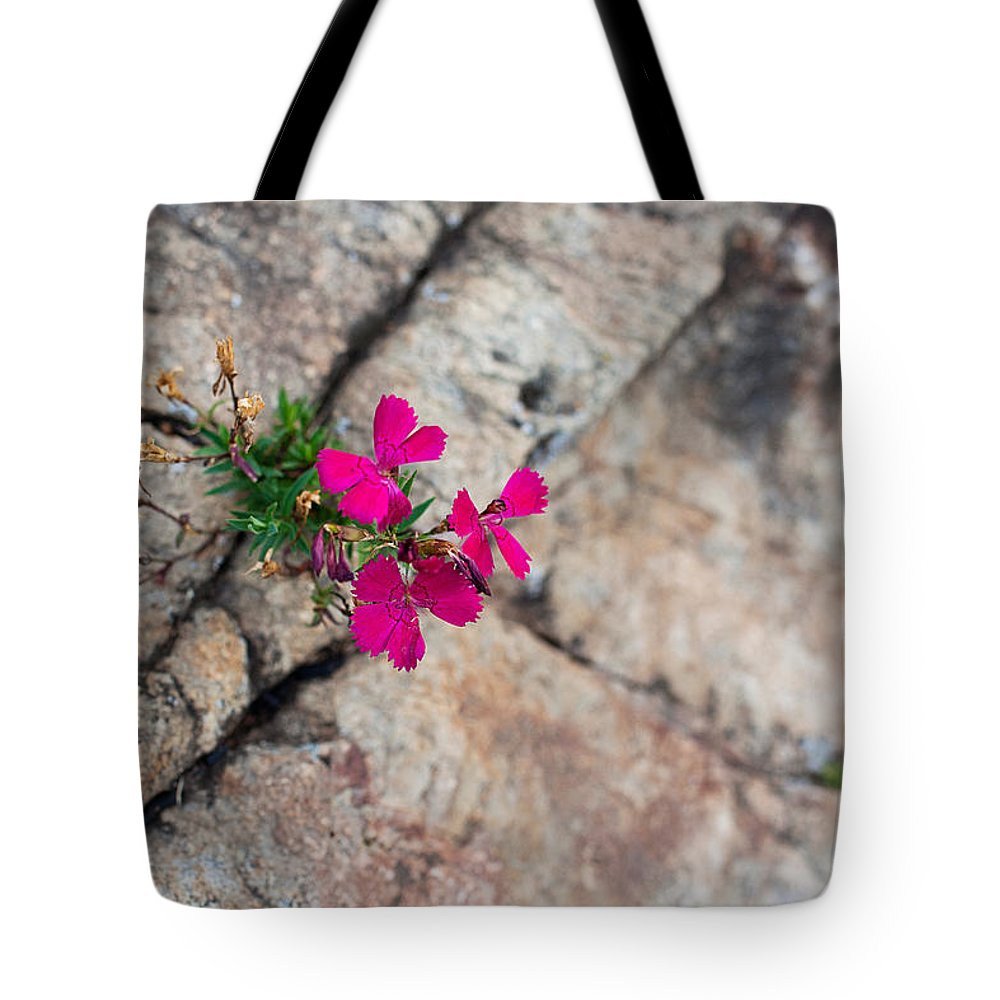 Fucia Flower Tote Bag featuring the photograph Determination by Lori Knisely
