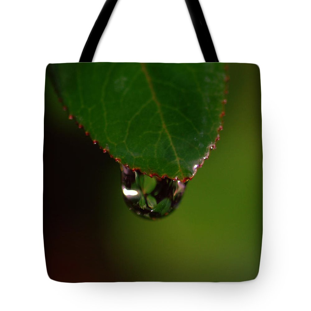 Plant Tote Bag featuring the photograph Dew Drop In by Donna Blackhall