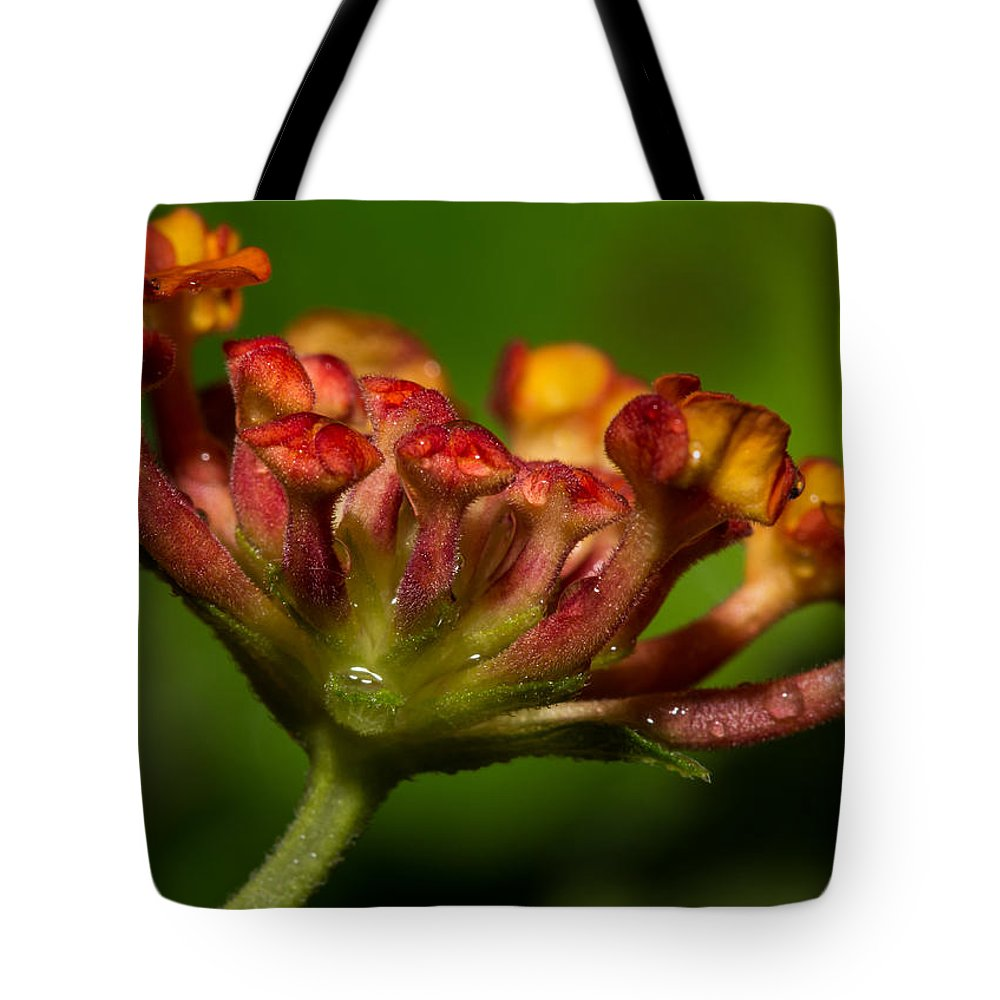 Afternoon Tote Bag featuring the photograph Dew Drops In A Desert Garden by Barbara Fagan Sullivan