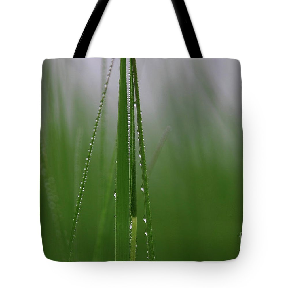 Grass Tote Bag featuring the photograph Dew Drops by Karol Livote
