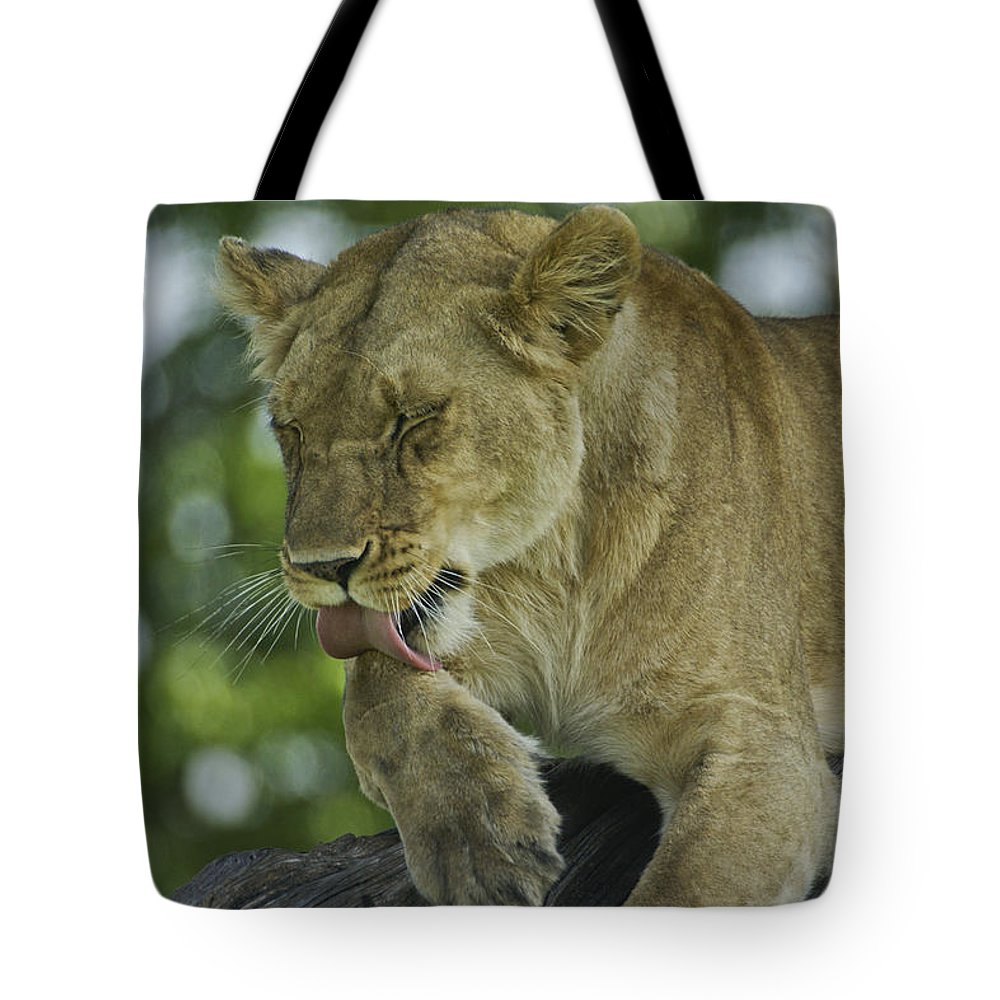Africa Tote Bag featuring the photograph Dirty Paws by Michele Burgess