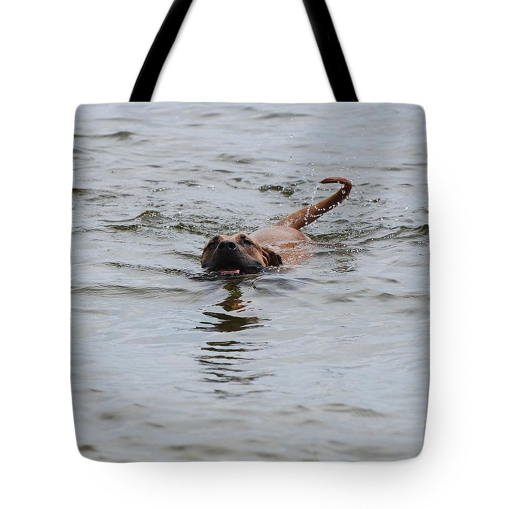 Swimming Tote Bag featuring the photograph Dirty Water Dog by Rob Hans