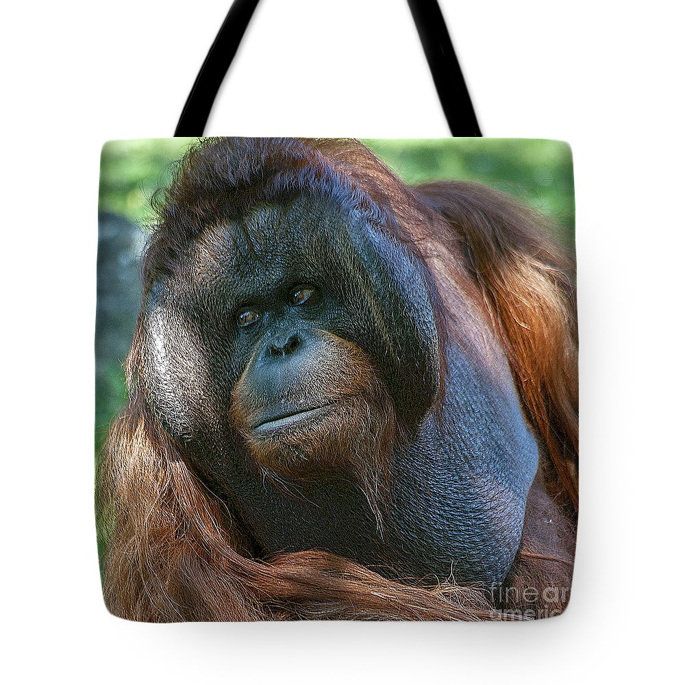 Orang Untang Tote Bag featuring the photograph Disapproving Glance by Heiko Koehrer-Wagner