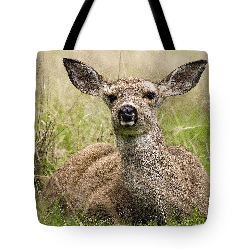 California Scenes Tote Bag featuring the photograph Doe Eyes by Norman Andrus