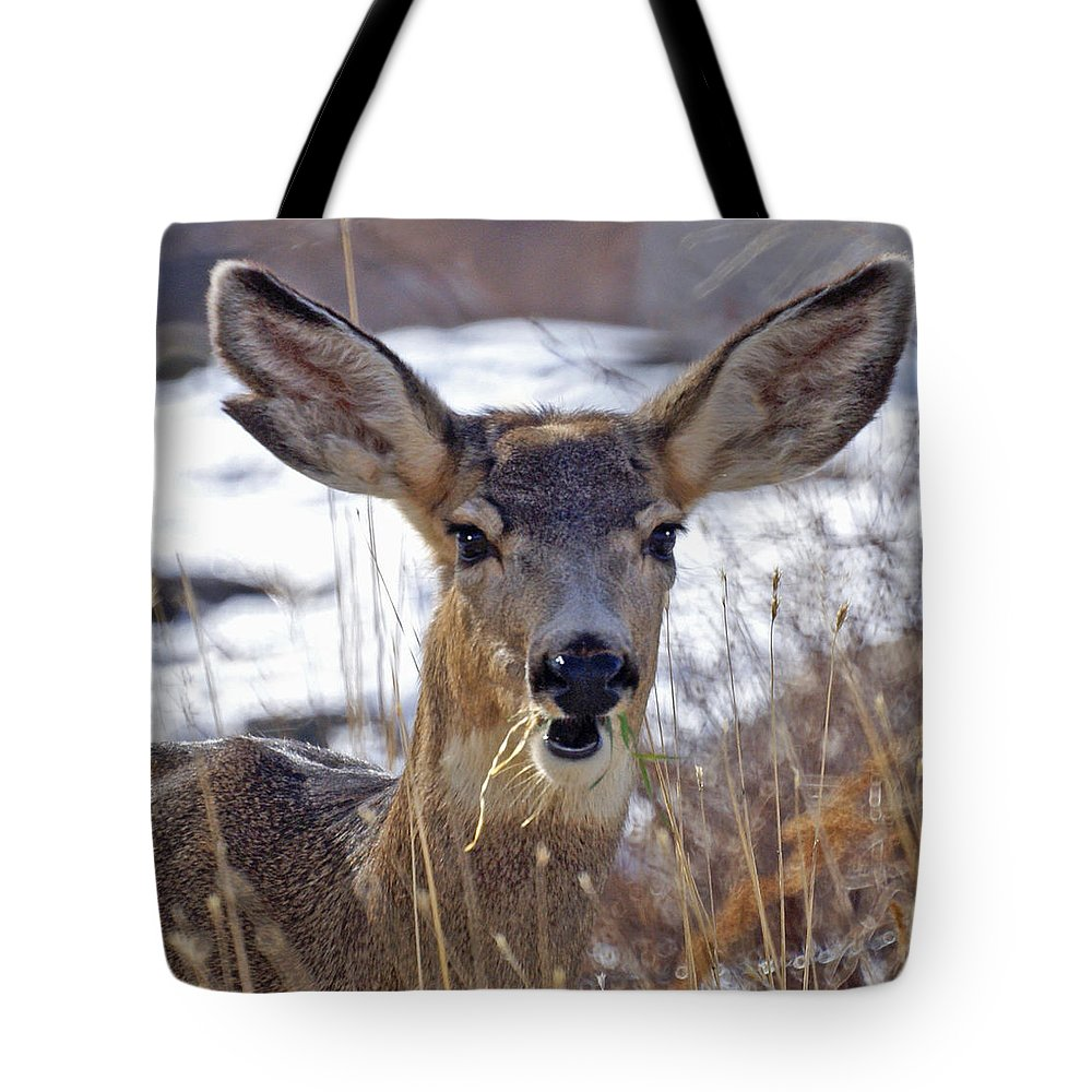 Doe Tote Bag featuring the photograph Doe by Heather Coen