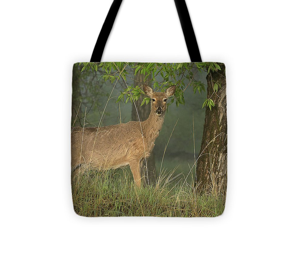 Mammal Tote Bag featuring the photograph Doe On A Foggy Morning In Wyoming by Dennis Hammer