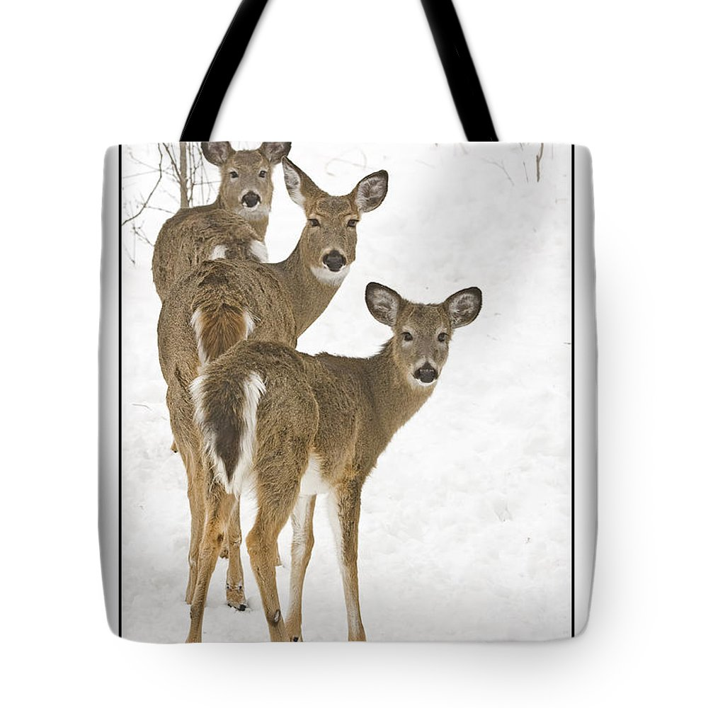 Whitetail Deer Tote Bag featuring the photograph Doe-ray-meh by Michael Greiner