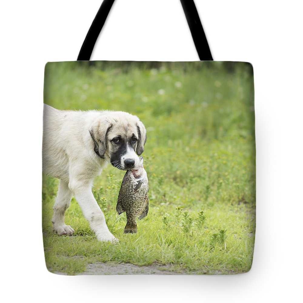 Fish Tote Bag featuring the photograph Dog Gone Fishing by Juli Scalzi