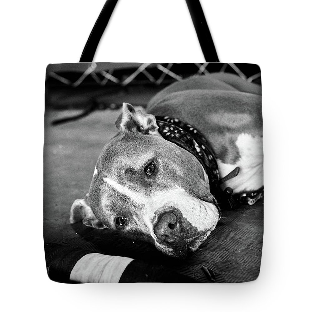 Dog Tote Bag featuring the photograph Dog At The Ring by Elena Rojas Garcia