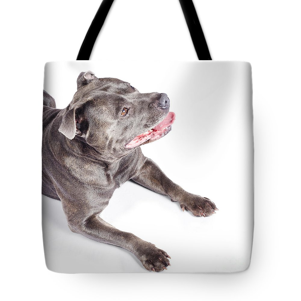 Angle Tote Bag featuring the photograph Dog Looking Up To Pet Copyspace by Jorgo Photography - Wall Art Gallery