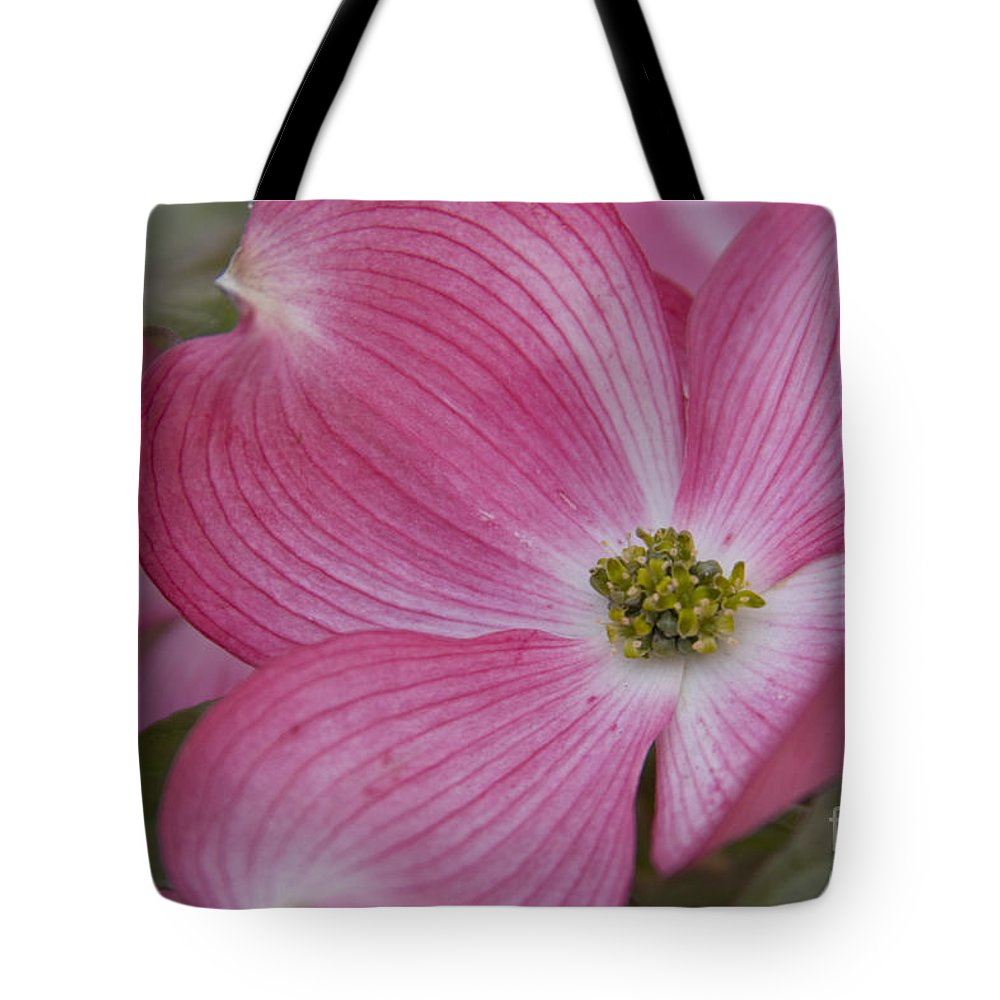 Dogwood Tote Bag featuring the photograph Dogwood Bloom by Idaho Scenic Images Linda Lantzy
