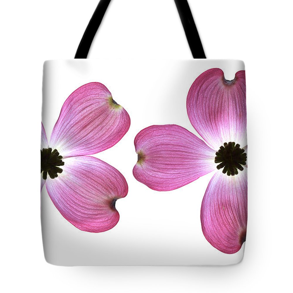 Genus Cornus Tote Bag featuring the photograph Dogwood Flowers by Tony Cordoza