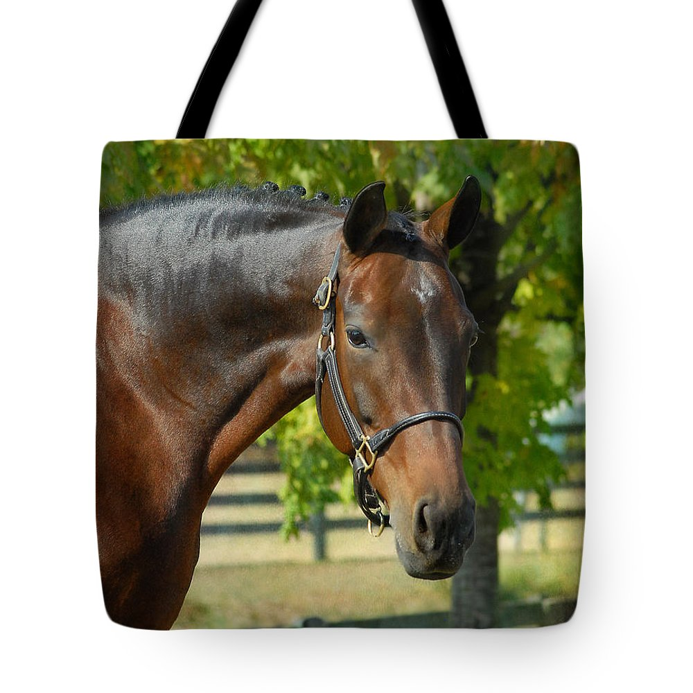 Warmblood Horses Tote Bag featuring the photograph Donna Gina by Fran J Scott