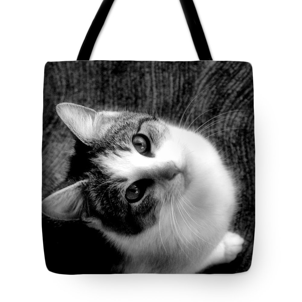 Cat Tote Bag featuring the photograph Don't Ever Leave by Gaby Swanson