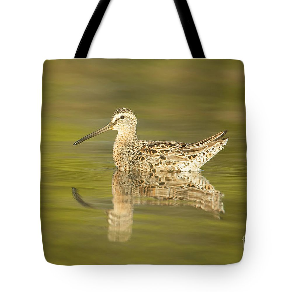 Clarence Holmes Tote Bag featuring the photograph Dowitcher Reflection I by Clarence Holmes