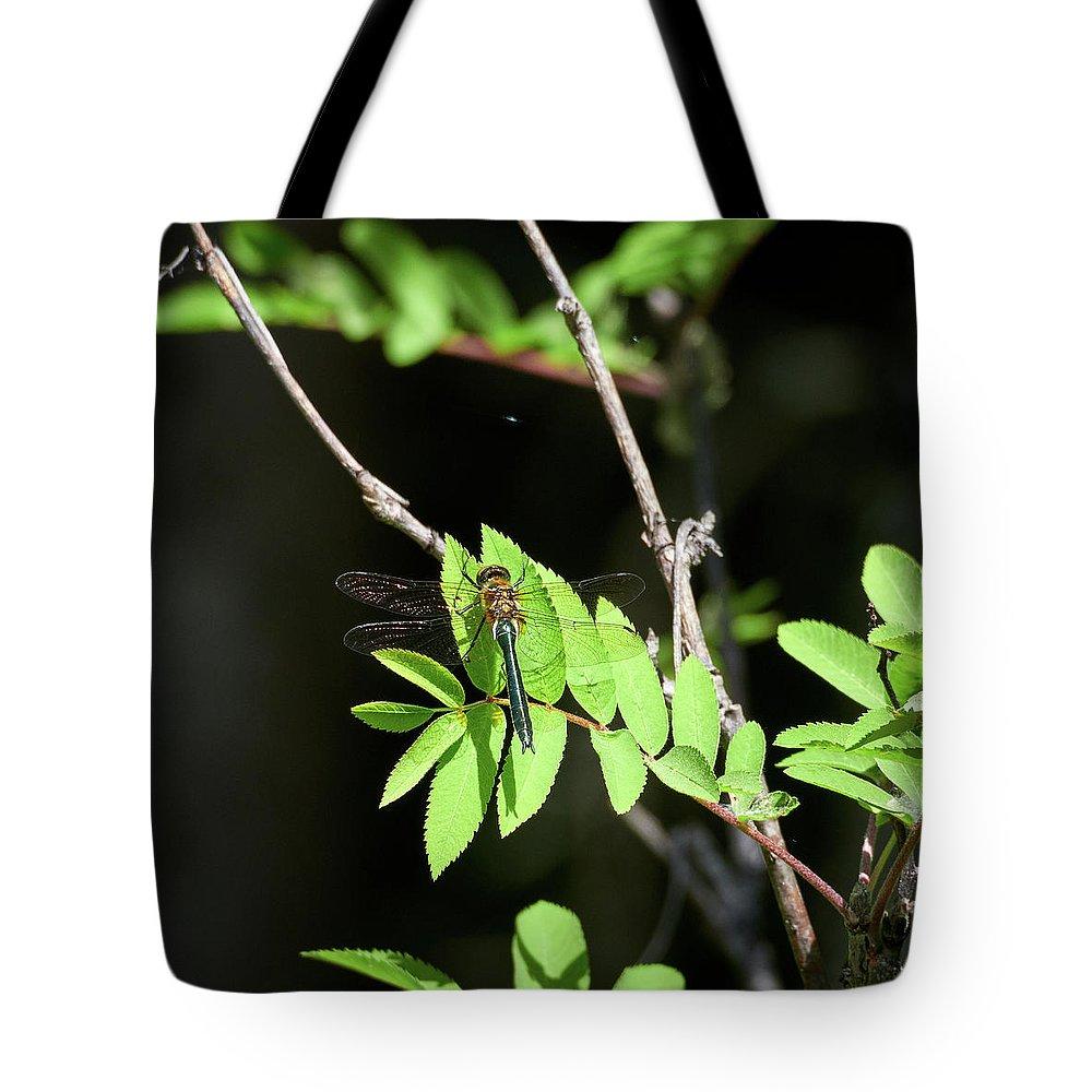 Cordulia Aenea Tote Bag featuring the photograph Downy Emerald by Jouko Lehto