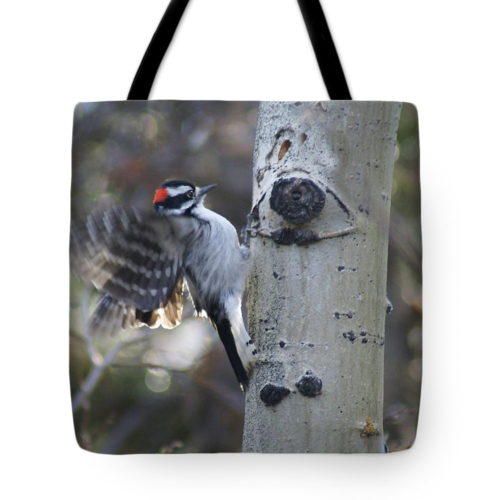 Woodpecker Tote Bag featuring the photograph Downy Woodpecker by Heather Coen