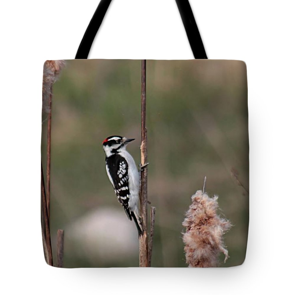 Woodpecker Tote Bag featuring the photograph Downy Woodpecker On Cattails by Linda Crockett