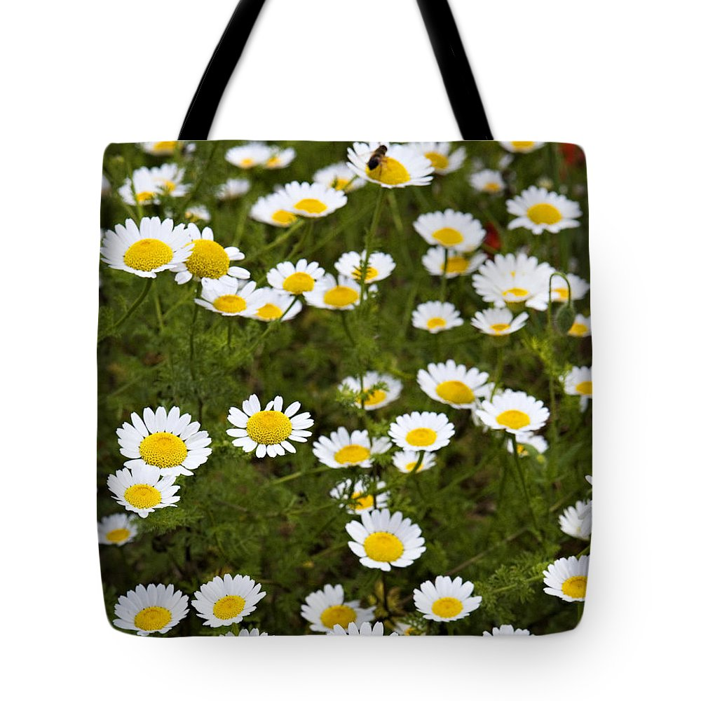 Daisy Tote Bag featuring the photograph Dozens Of Daisies by Marilyn Hunt