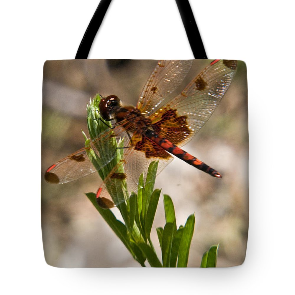 Dragonfly Tote Bag featuring the photograph Dragonfly Resting by Douglas Barnett